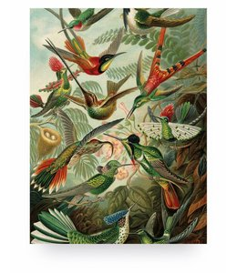 Prints auf Holz, Exotic Birds, M