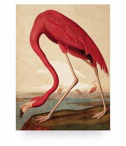 Prints auf Holz, Flamingo, M
