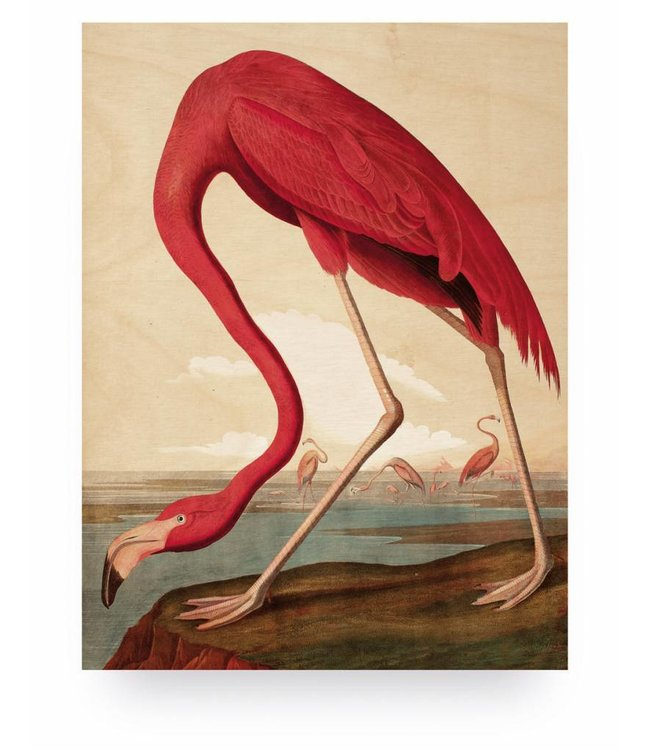 Wood print, Flamingo, M, 60 x 80 cm