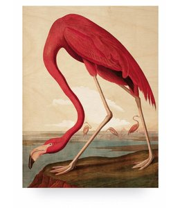 Flamingo, L
