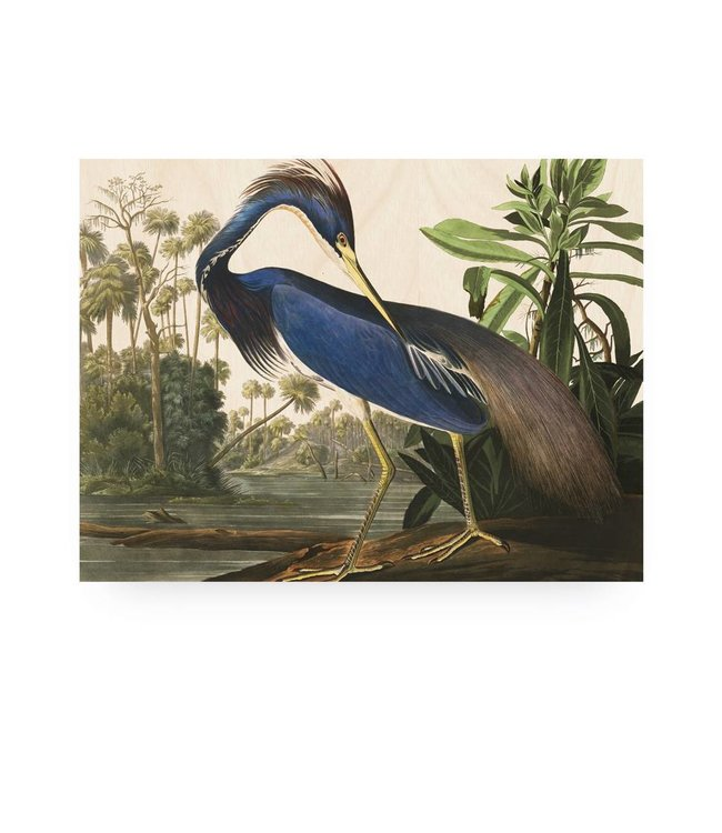 Prints auf Holz, Louisiana Heron, M, 80 x 60 cm