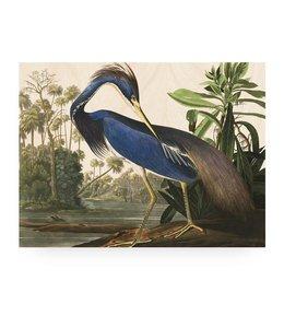 Prints auf Holz, Louisiana Heron, L