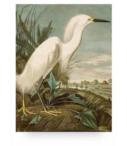 Print op hout Snowy Heron, L