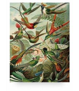 Print op hout Exotic Birds, L