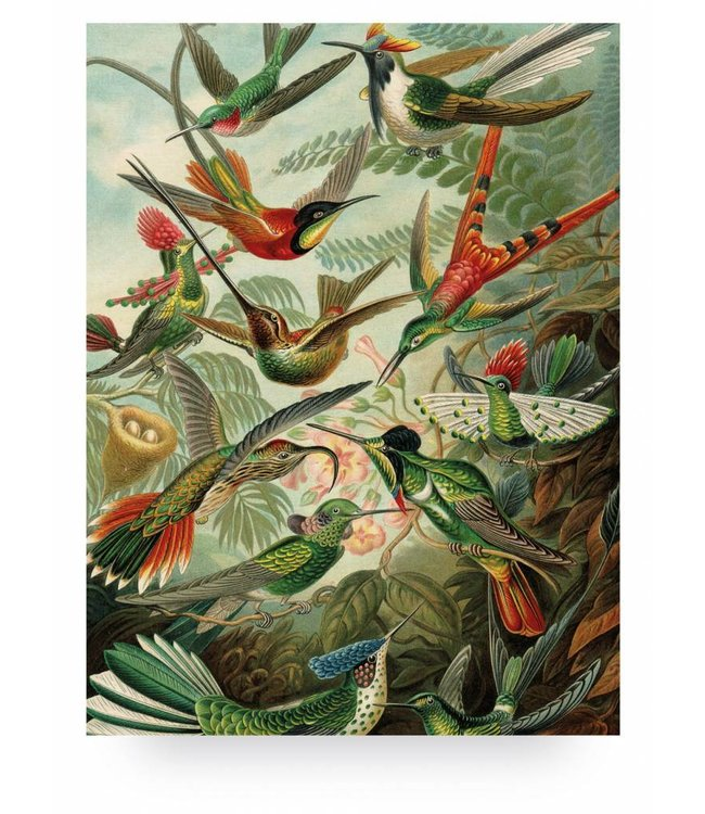 Wood print, Exotic Birds, L, 75 x 100 cm