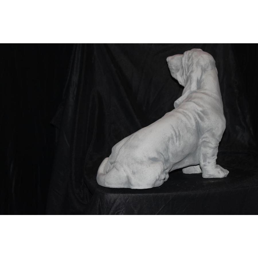 Basset Jachthond gefokt voor het opsporen van konijnen en ander kleinwild.( H 29 cm)