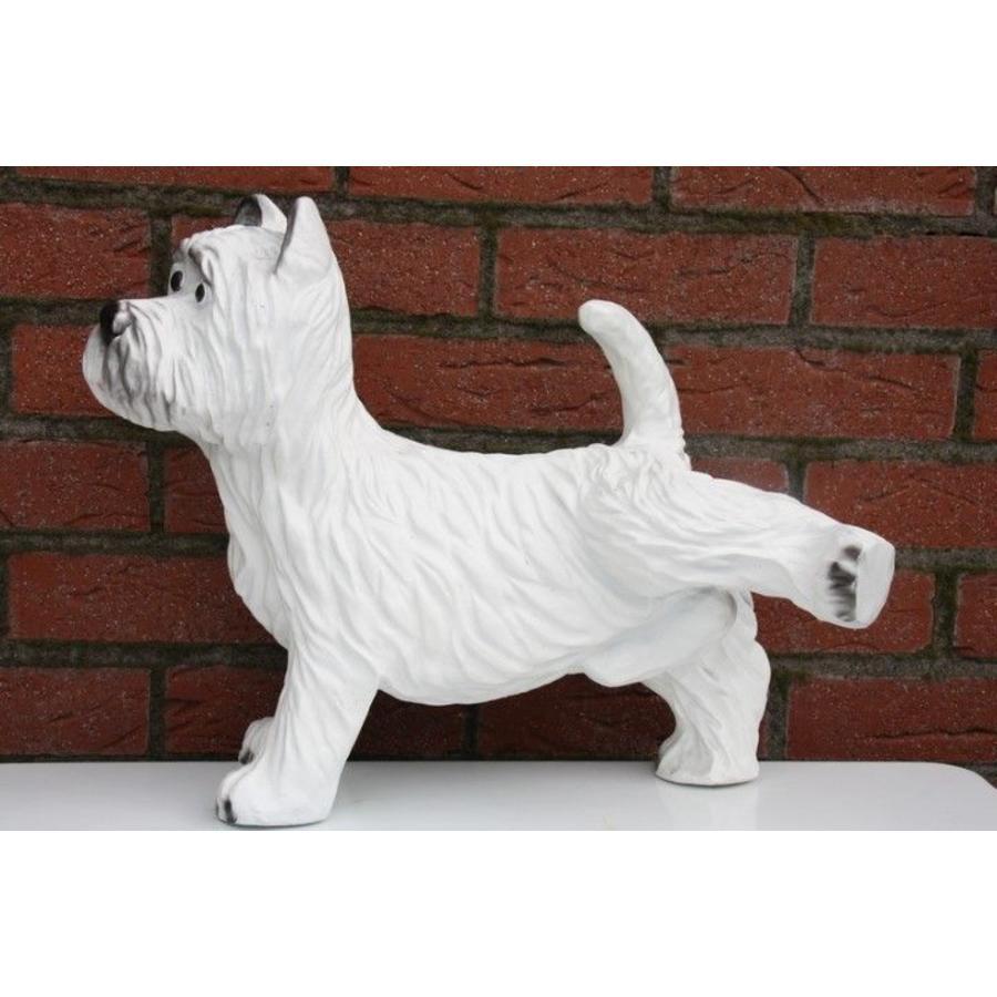 Hond ( Terriër)-1