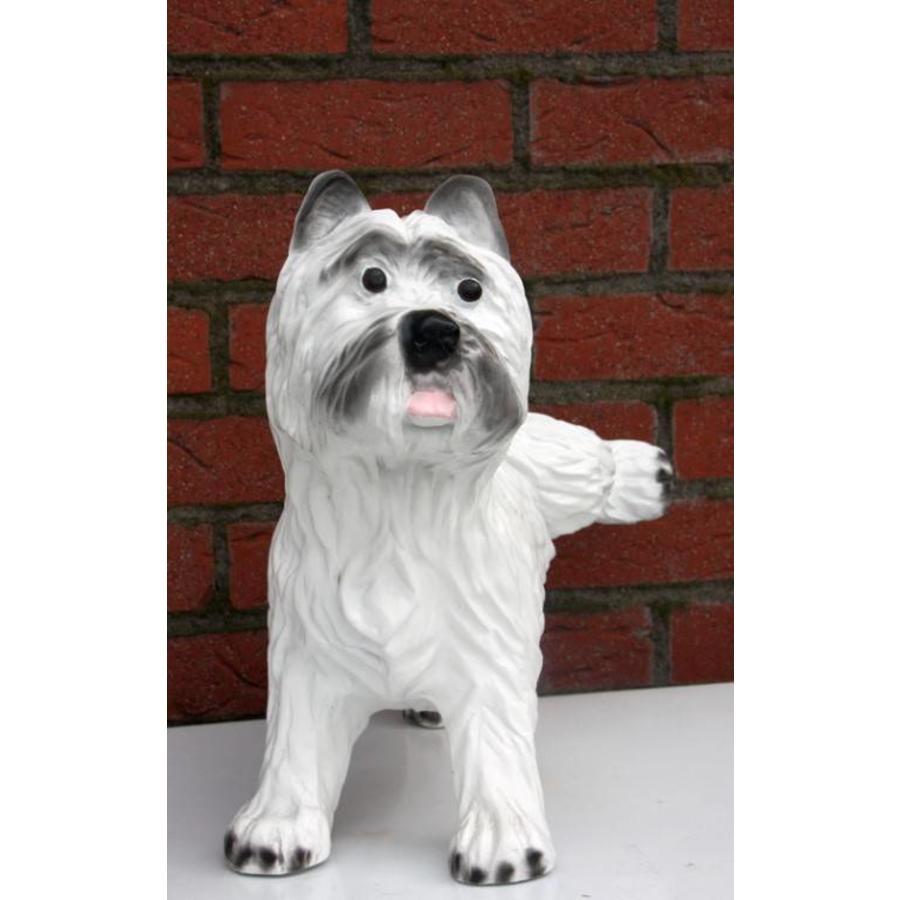 Hond ( Terriër)-2