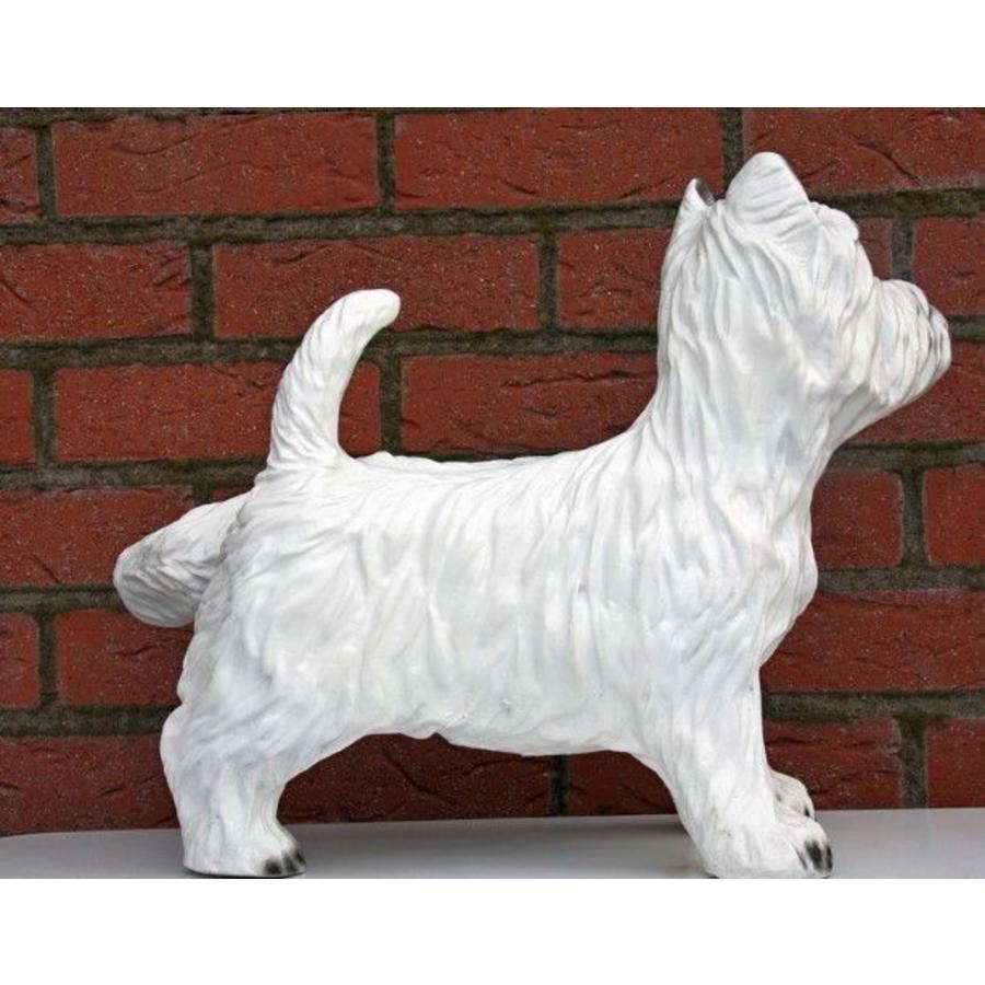 Hond ( Terriër)-3