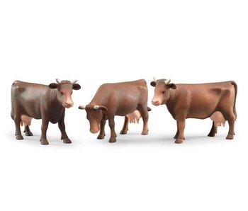 Bruder koe