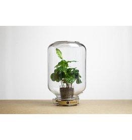 Pikaplant Pikaplant Jar Coffea Box