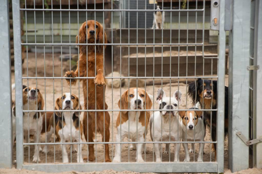 Dierenopvang Amsterdam Test Donatie aan onze dieren