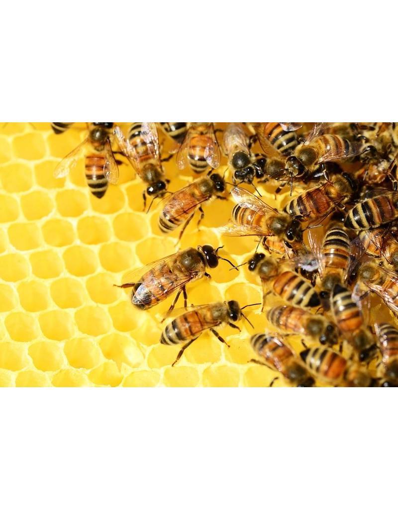 Ocram natuurproducten Bijen balsem Propolis balsem extra sterk
