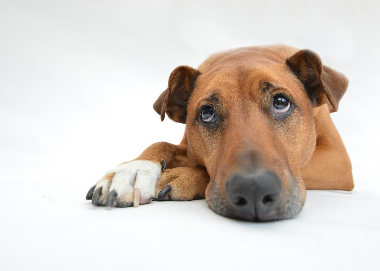trauriger Hund :(