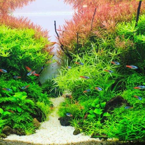 Freshwater LED