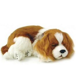 Perfect Petzzz Perfect Petzzz Hond Cavalier King Charles