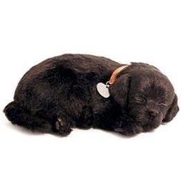 Perfect Petzzz Perfect Petzzz Hond Labrador Zwart
