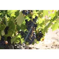 BIO dynamische Spaanse rode wijn (75cl) - El Recio
