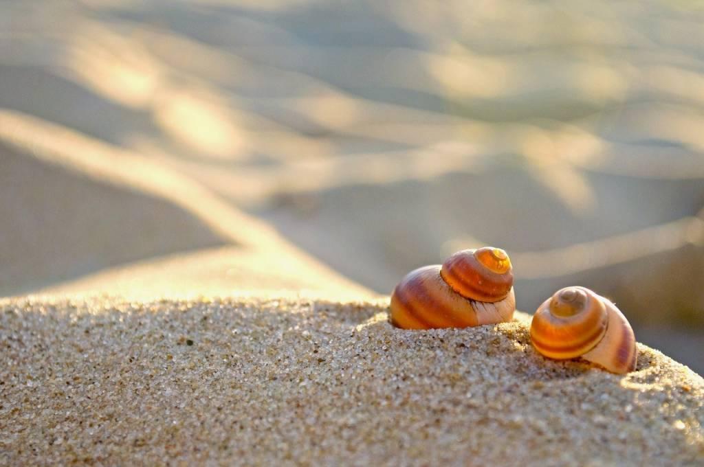 De strandtent mag weer open