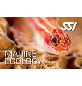 Marine Ecology SSI specialty instructor